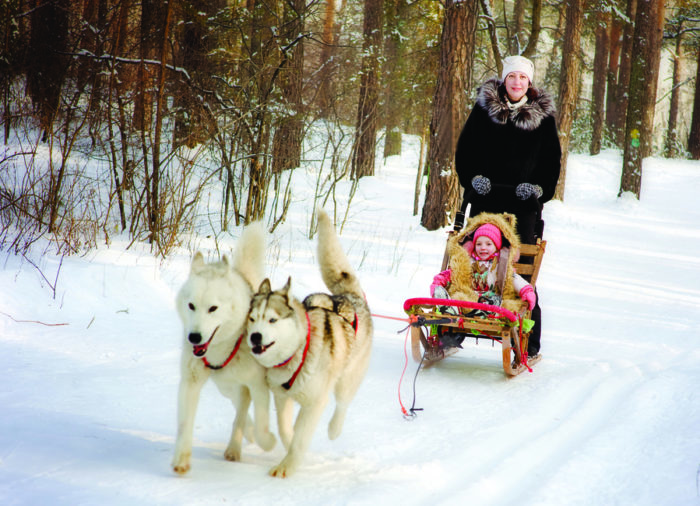 What to do in Italy in Winter: dog sledding